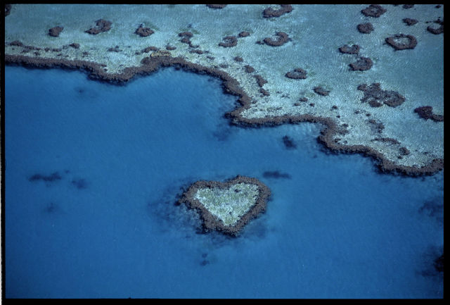 heart shaped coral2