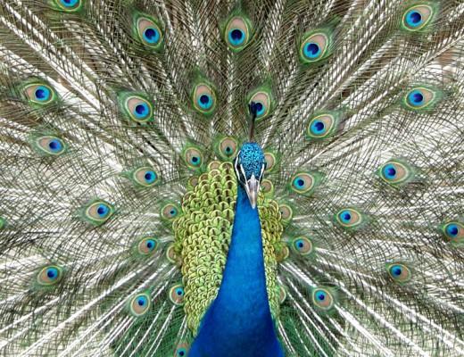 Sri Lanka Wildlife - National Parks