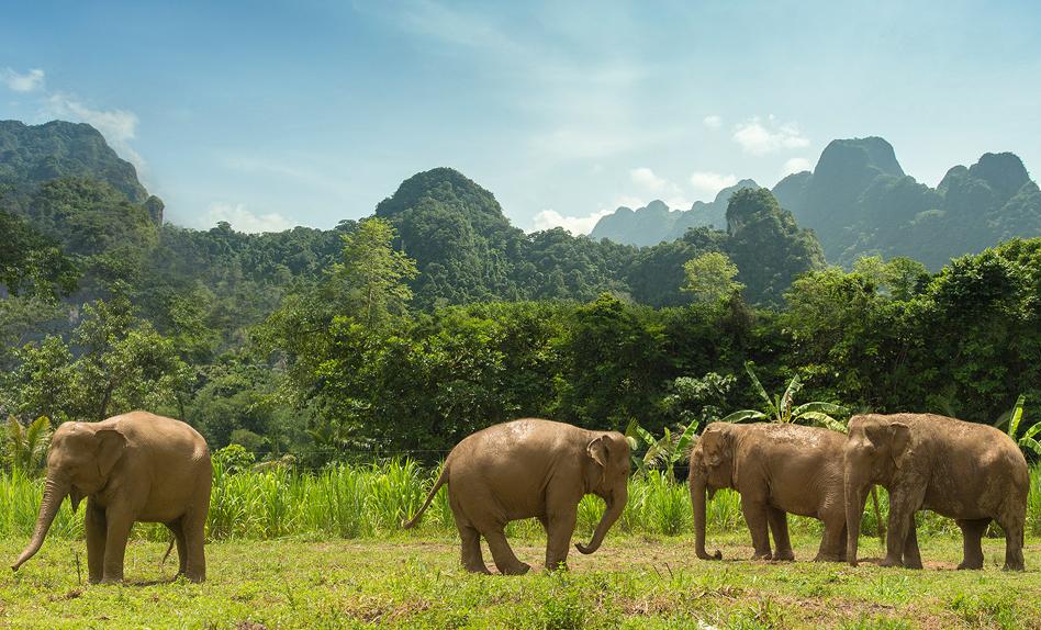 Elephant Hills - World Elephant Day