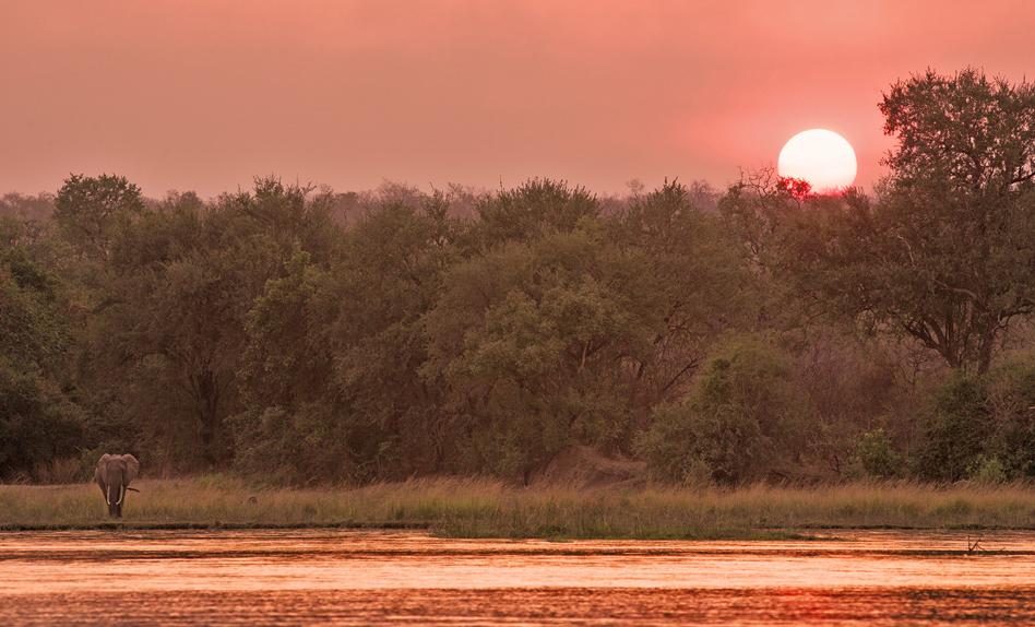 azura-selous-elephant-in-sunset-948x574px
