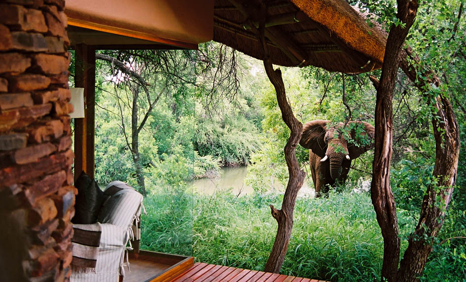 Makanyane south africa elephant room view safari