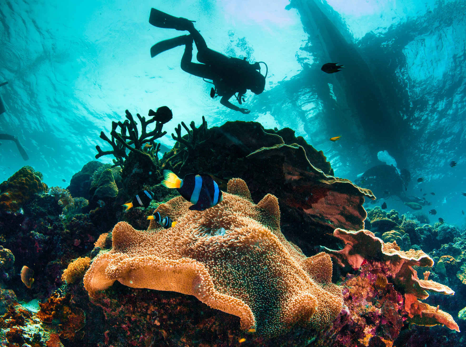 cebu diving holiday to the philippines