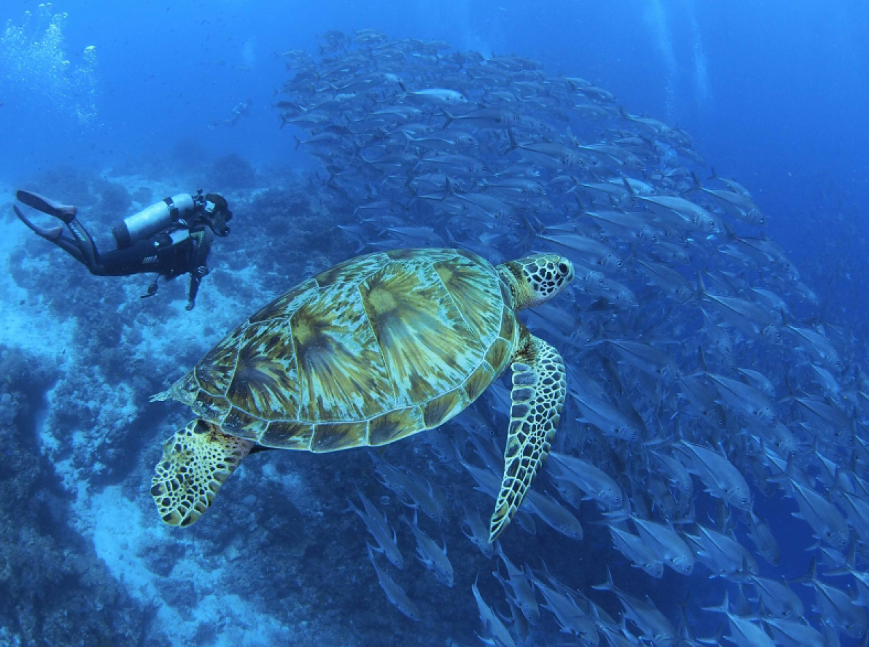 diving holiday in the philippines
