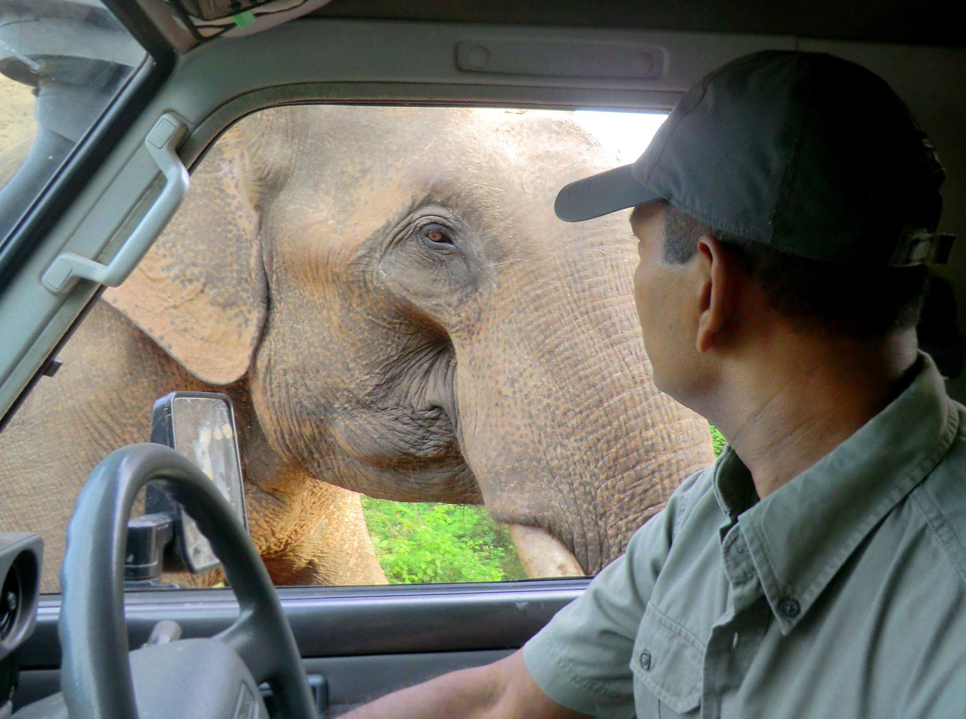 noel-rodrigo-leopard-safari-yala-national-park-sri-lanka-elephant