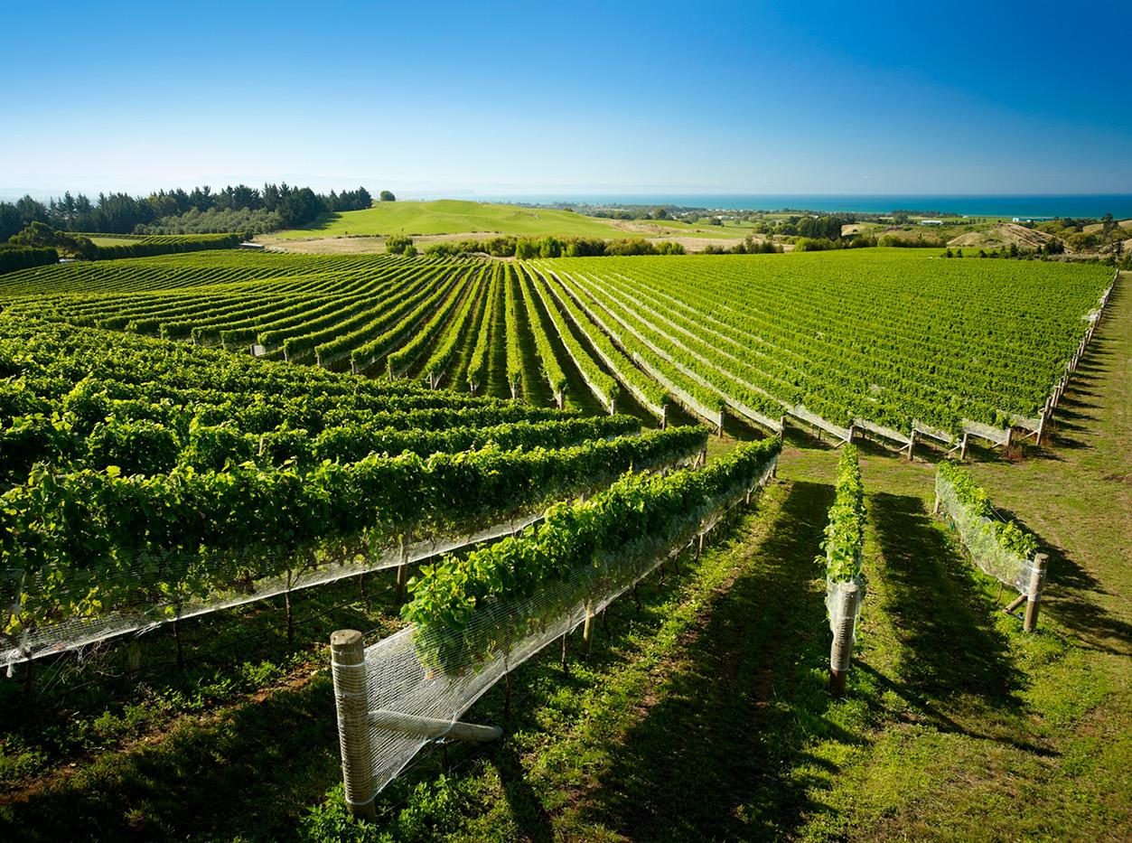 vineyard new zealand wine