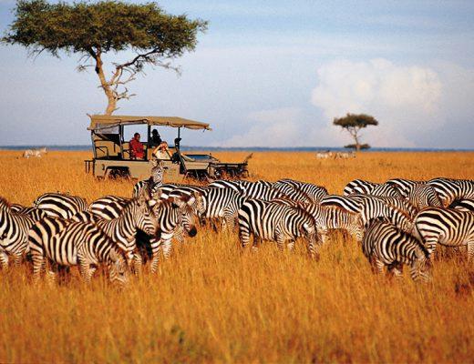 Tanzania Safari Camps