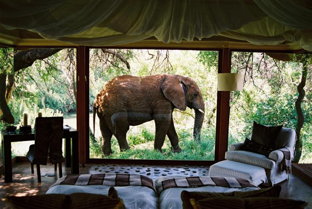 Elephant Outside Suite 02 (Medium)