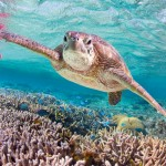 The Great Barrier Reef - Turquoise Holidays