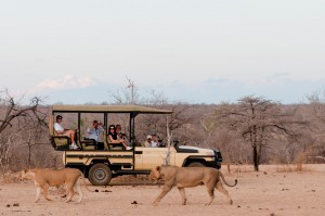 azura-selous-on-game-drive-medium