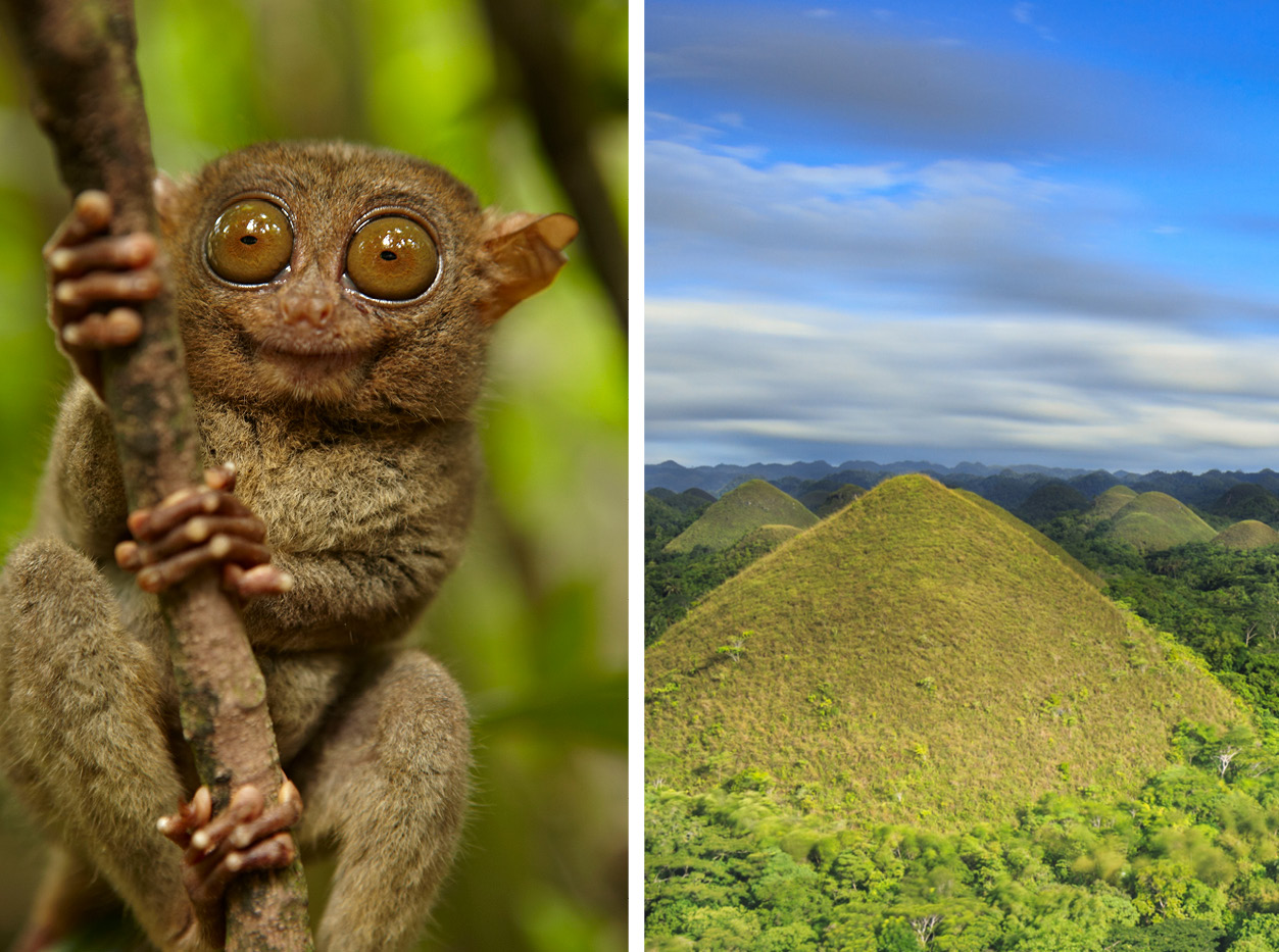 Chocolate Hills and tarsier holiday in the philipinnes