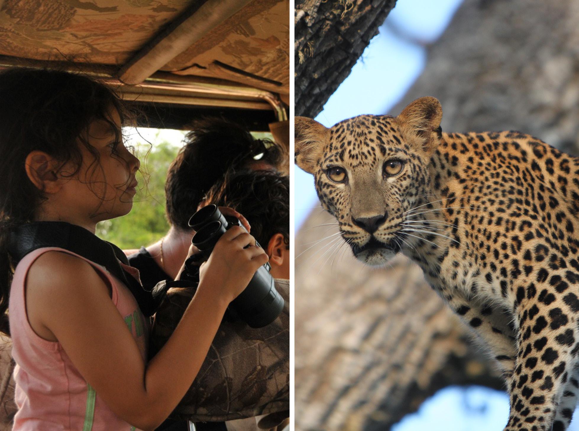 noel-rodrigo-leopard-safari-yala-national-park-sri-lanka-leopard