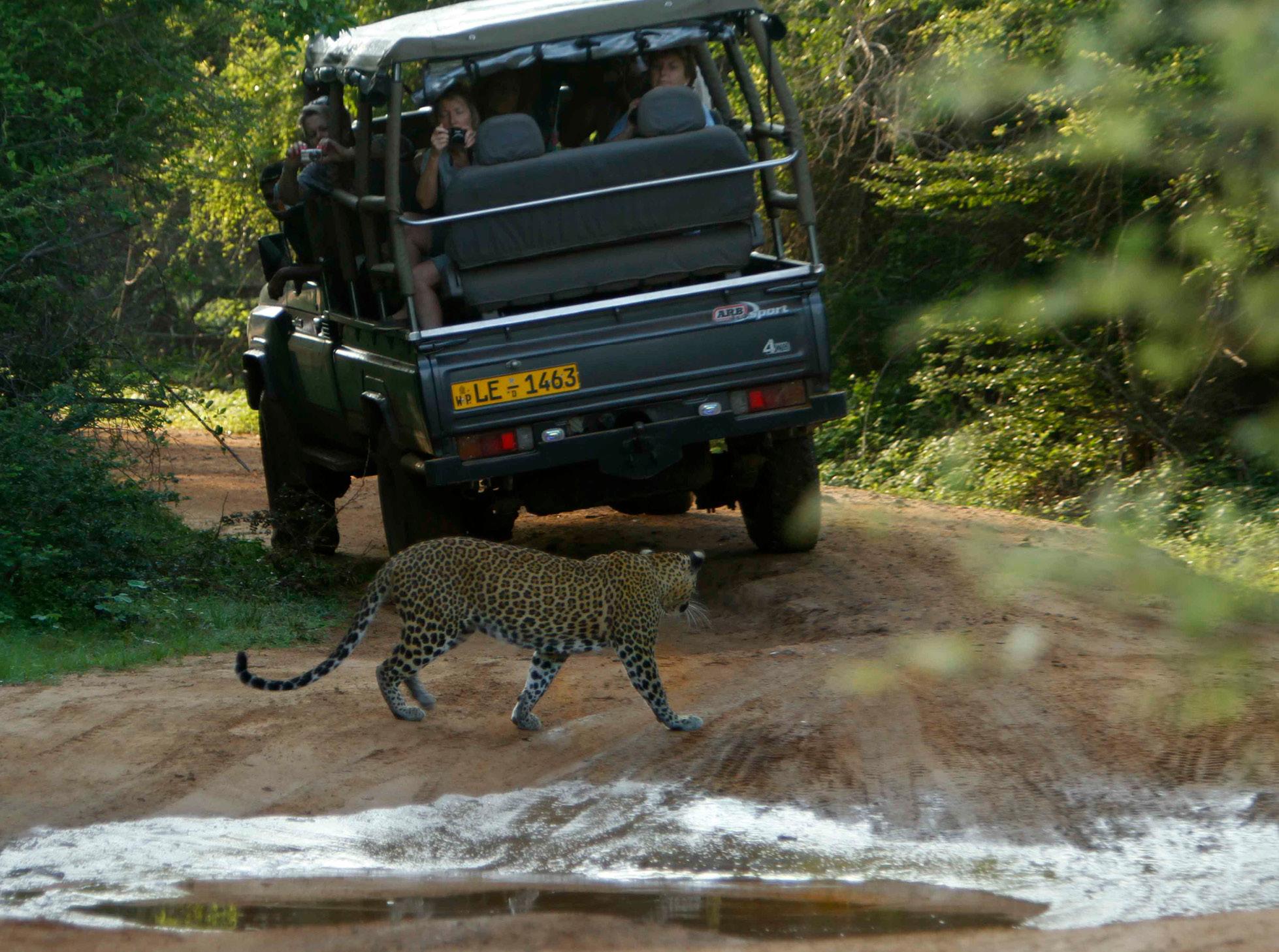noel-rodrigo-leopard-safari-yala-national-park-sri-lanka-safari-leopard