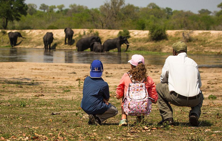 chitwa chitwa family safari south africa