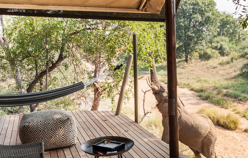 Garonga_accommodation safari south africa elephant