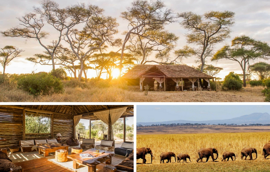Kuro Tarangire Tanzania Safari