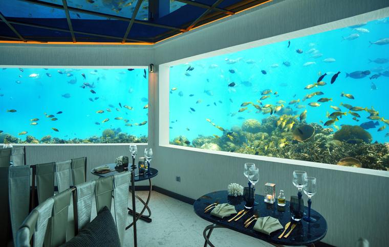 Maldives Six Meters