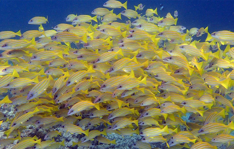 milaidhoo maldives snorkelling