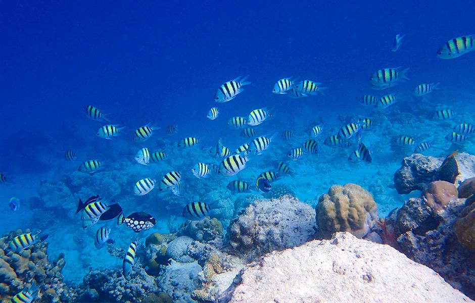 milaidhoo snorkelling maldives