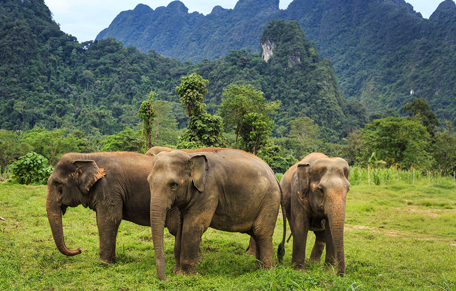 Elephant hills tented jungle camp Thailand experience