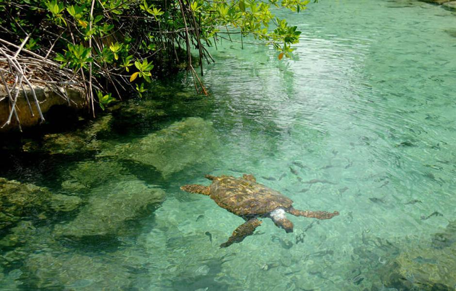turtle mexico